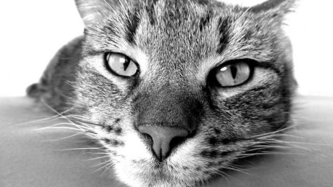 Les chats se foutent-ils réellement de nous ?