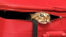 chat-ninja-valise