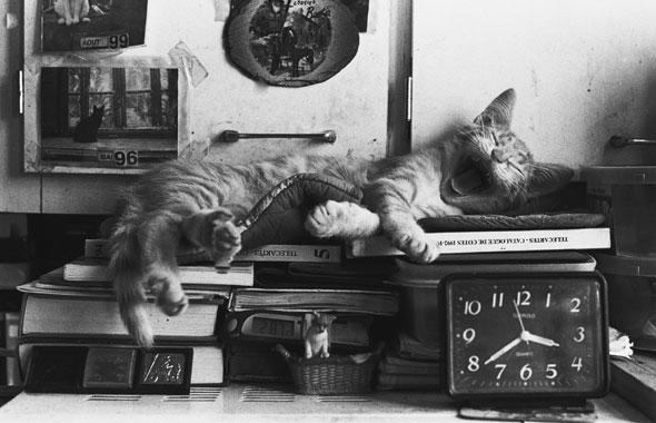 chat-qui-dort2