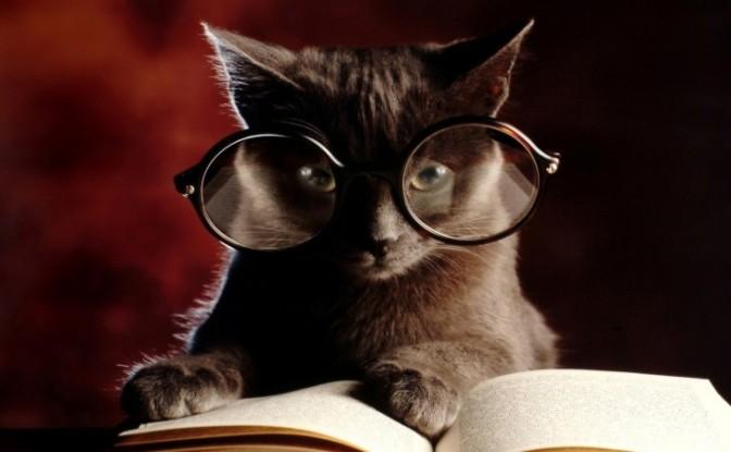 La symbolique du chat dans le monde à travers les âges