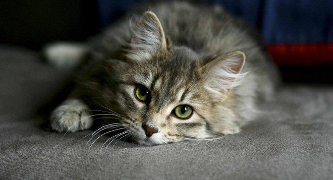 Les 10 raisons pour lesquelles on ne veut pas d'un chat à la maison