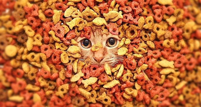 Alimentation : Pourquoi le chat est parfois si difficile ?