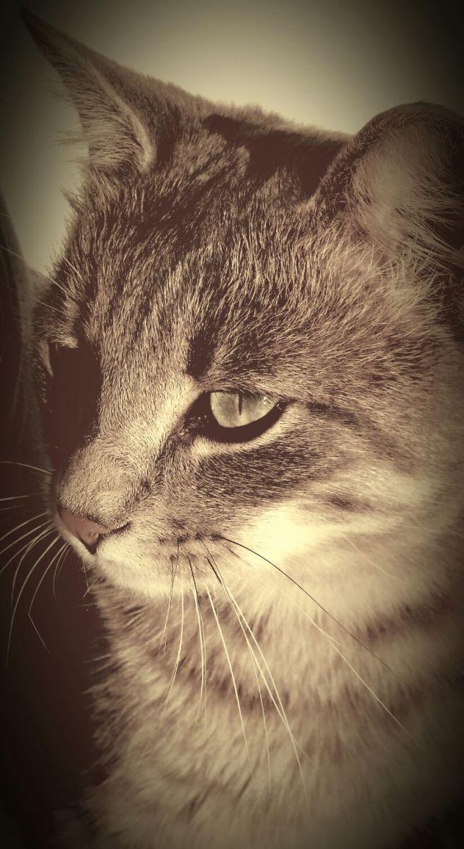 Les visites de chats à domicile