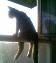 Des astuces pour bien vivre avec son chat