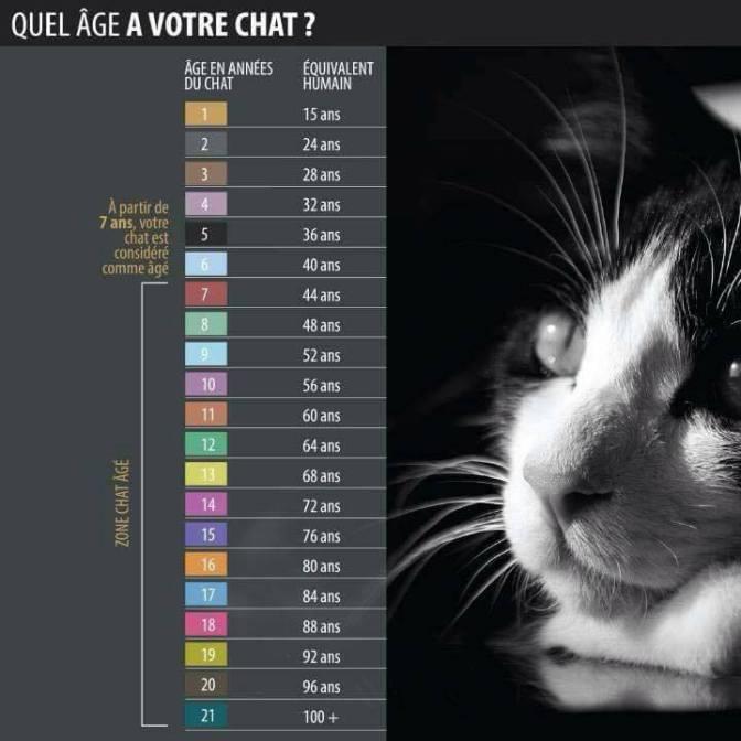 Quel âge a votre chat ?
