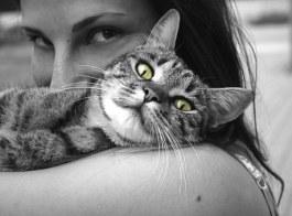 animals-617305__340