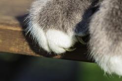 cat-1136361_960_720