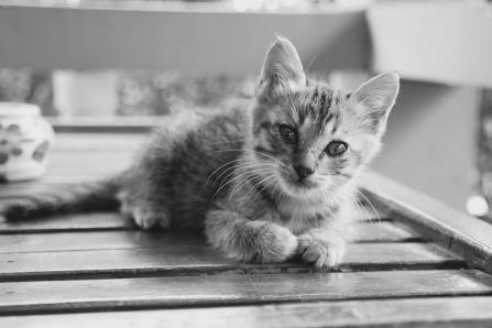 cat-1189815_960_720