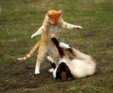 cat-1234950_960_720