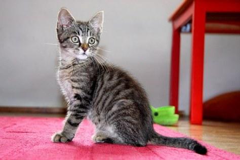 cat-1528745__340
