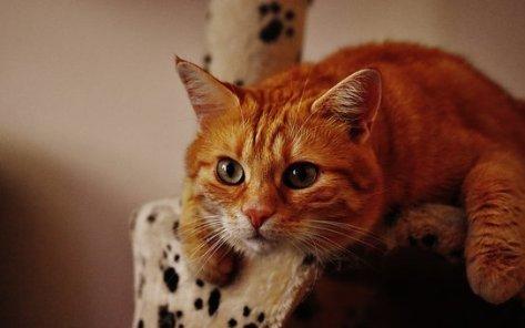 cat-1692702__340