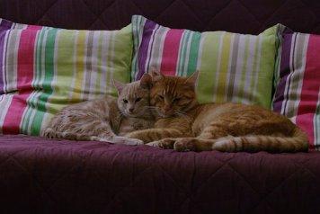 cat-1793100__340