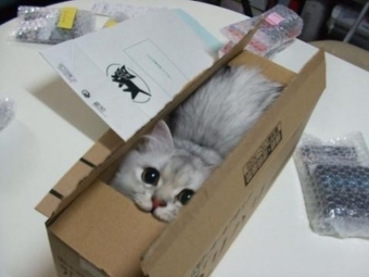 cat-in-a-box3