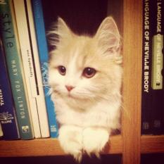 chat-bibliotheque
