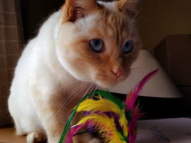 Album de La Caresse Cat-Sitter