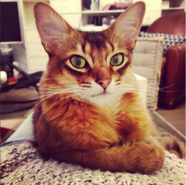 Garde de chat à domicile