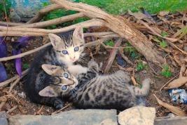 kittens-1170324_960_720