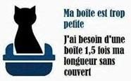 Comprendre la relation entre le chat et sa litière