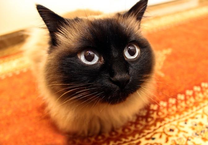 7 idées pour offrir un environnement sain à son chat