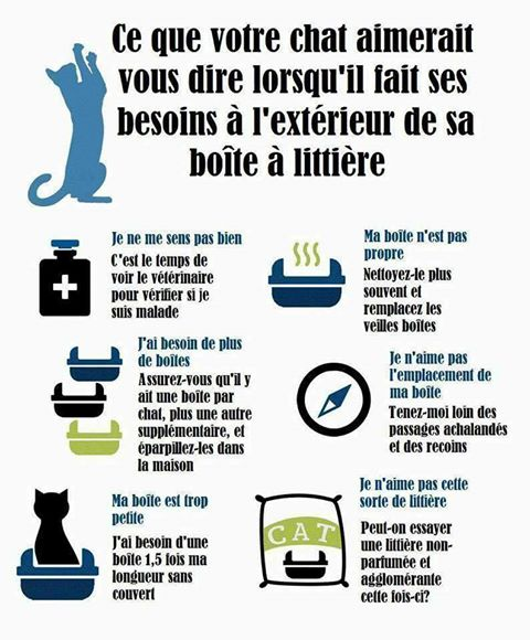 chat-litiere