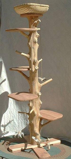 culture-chat-arbre